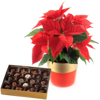 poinsettia-plant-and-holiday-chocolates